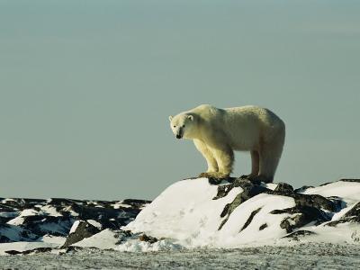 A Polar Bear Stands Atop a Snow-Covered Rock-Norbert Rosing-Photographic Print