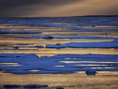 A Polar Bear, Ursus Maritimus, on the Edge of Ice Flow in Davis Strait-Jay Dickman-Photographic Print