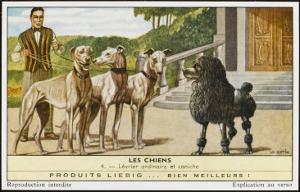 A Poodle Confronts Three Greyhounds