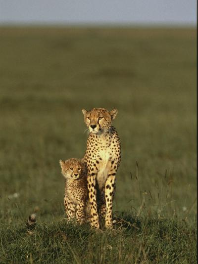 A Portrait of a Female Cheetah and Her Cub-Norbert Rosing-Photographic Print