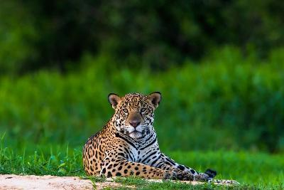 A Portrait of a Wild Jaguar Resting on the Banks of the Cuiaba River, in the Pantanal-Steve Winter-Photographic Print