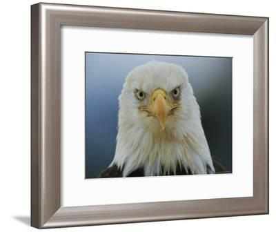 A Portrait of an American Bald Eagle-Klaus Nigge-Framed Photographic Print