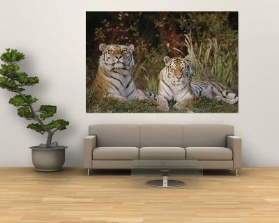 A Portrait of Two Captive Siberian Tigers-Dr^ Maurice G^ Hornocker-Wall Mural