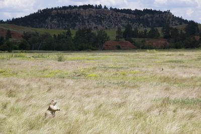 https://imgc.artprintimages.com/img/print/a-prairie-dog-stands-up-in-a-landscape-of-prairie-grass_u-l-pw55v30.jpg?p=0
