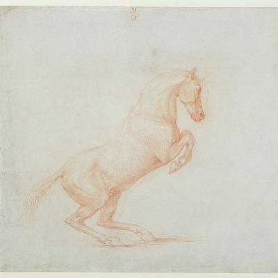 A Prancing Horse, Facing Right, 1790 (Red Chalk on Paper)-George Stubbs-Giclee Print