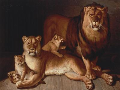 A Pride of Lions-Edward S^ Curtis-Giclee Print