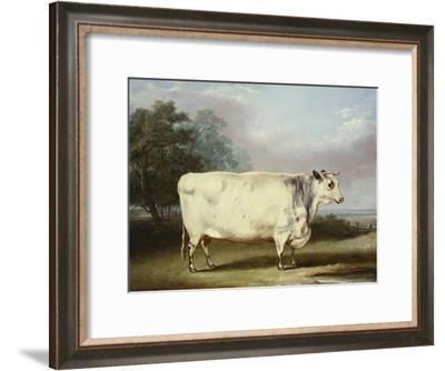 A Prize Cow-William Henry Davis-Framed Giclee Print
