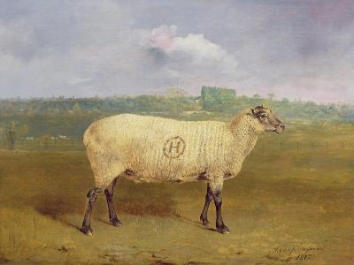 A Prize Ewe with Monogram 'H', Belonging to Mr J.A. Houblon, Hallingbury Place, Essex, 1812-Abraham Cooper-Giclee Print