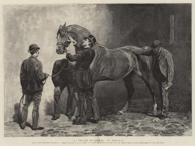 A Prize-Winner, If Sound-John Charlton-Giclee Print