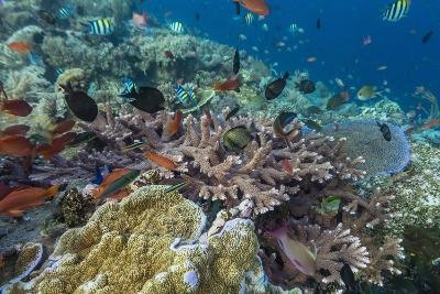 A Profusion of Coral and Reef Fish on Batu Bolong, Komodo Island National Park, Indonesia-Michael Nolan-Photographic Print