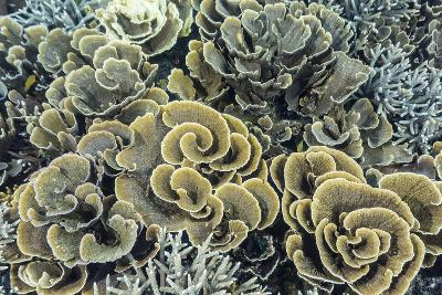 A Profusion of Hard and Soft Coral Underwater on Siaba Kecil-Michael Nolan-Photographic Print