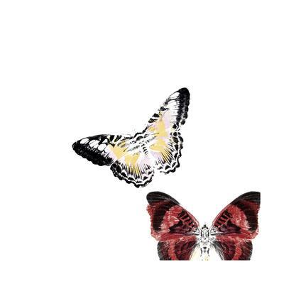 Butterflies Dance V