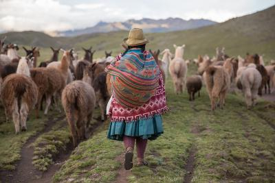 A Quechua Woman Herding Llamas, Alpacas, and Sheep Back to Town from Grazing in the Mountains-Erika Skogg-Photographic Print