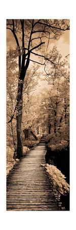 https://imgc.artprintimages.com/img/print/a-quiet-stroll-i_u-l-q1bevs20.jpg?artPerspective=n