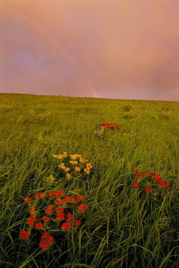 A Rainbow Above the Prairie at Sunrise-Michael Forsberg-Photographic Print