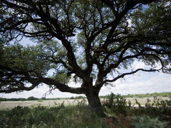A Ranch Landscape with a Large Tree-Joel Sartore-Photographic Print
