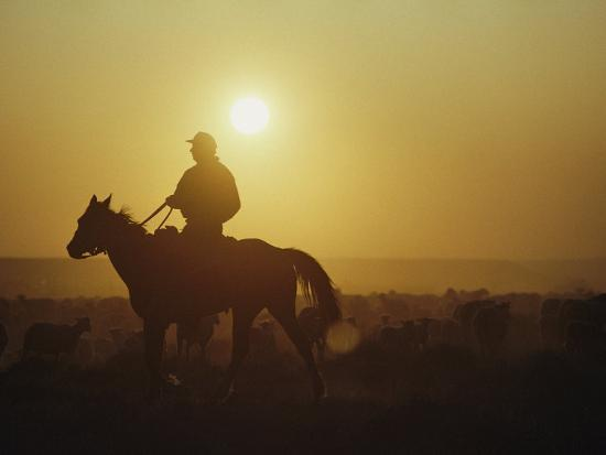A Rancher Rounds up Sheep on a Wyoming Farm-Joel Sartore-Photographic Print