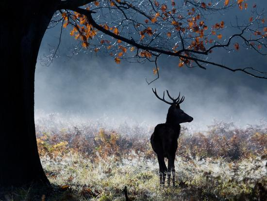 A Red Deer Stag in a Forest with Colorful Fall Foliage-Alex Saberi-Photographic Print