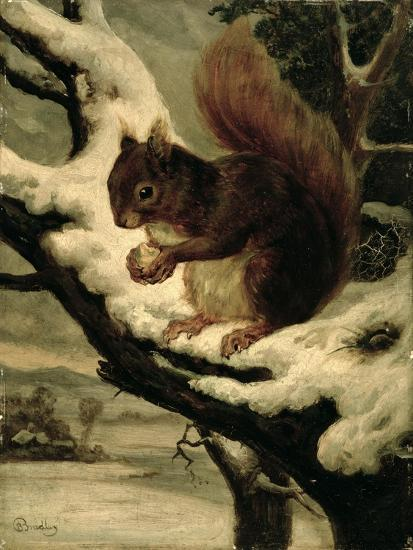 A Red Squirrel Eating a Nut-Basil Bradley-Giclee Print