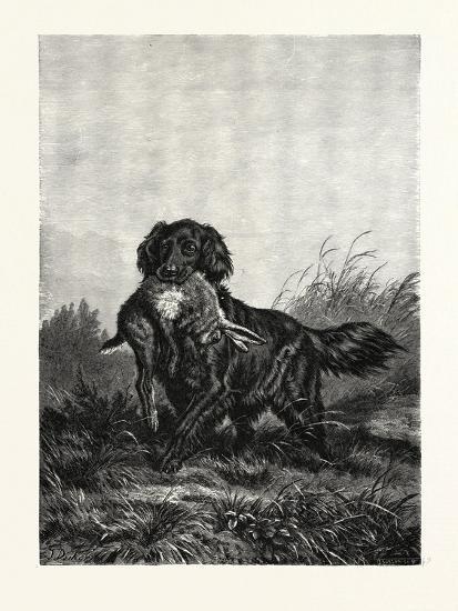 A Retriever, after Deiker, a Type of Gun Dog That Retrieves Game for a Hunter--Giclee Print