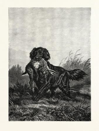 https://imgc.artprintimages.com/img/print/a-retriever-after-deiker-a-type-of-gun-dog-that-retrieves-game-for-a-hunter_u-l-pw9xcs0.jpg?p=0