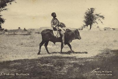 A Riding Bullock--Photographic Print