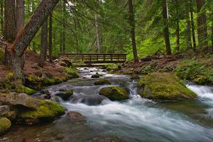 A River and a Wooden Bridge across It. Picture Taken in Summer. the Path across the River Leads to