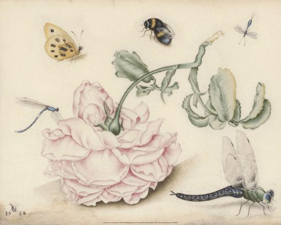 A Rose and Five Insects (1618)-Christoffel van den Berghe-Art Print