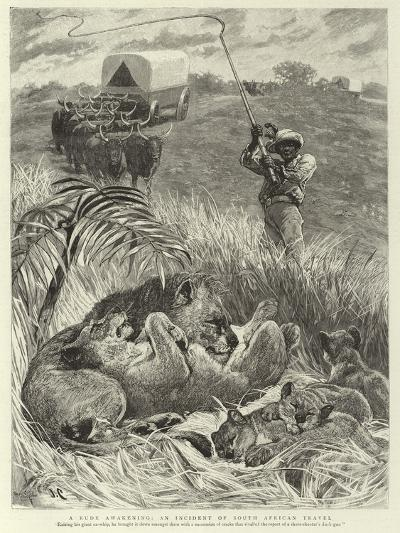 A Rude Awakening, an Incident of South African Travel--Giclee Print