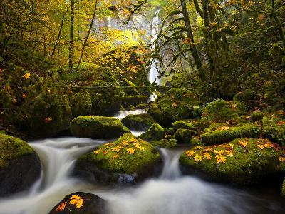 A Rushing Mccord Creek with Yellow Fall Color from Bigleaf Maple, Columbia Gorge, Oregon, USA-Gary Luhm-Photographic Print