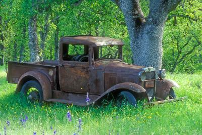A Rusting 1931 Ford Pickup Truck Sitting in a Field under an Oak Tree-John Alves-Photographic Print
