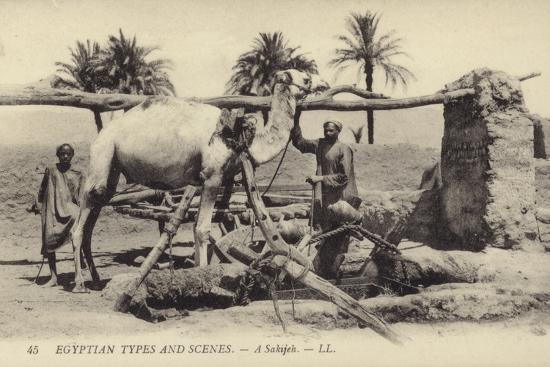 A Sakijeh--Photographic Print