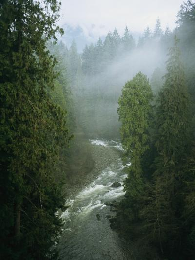 A Salmon Spawning River Runs Through a Temperate Rainforest-Taylor S^ Kennedy-Photographic Print