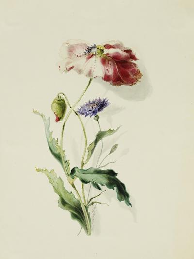 A Scarlet Poppy and a Cornflower-Thomas Holland-Giclee Print