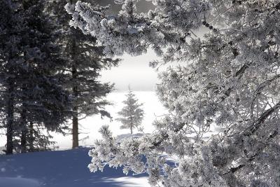 A Scenic Landscape of Snow-Covered Trees and Ground-Robbie George-Photographic Print