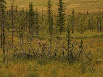 A Scenic View of a Spruce Bog-Raymond Gehman-Photographic Print