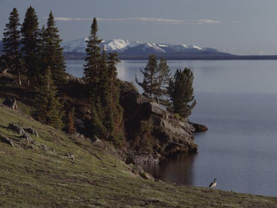 A Scenic View of Yellowstone Lake with a Canada Goose on the Shore-Tom Murphy-Photographic Print
