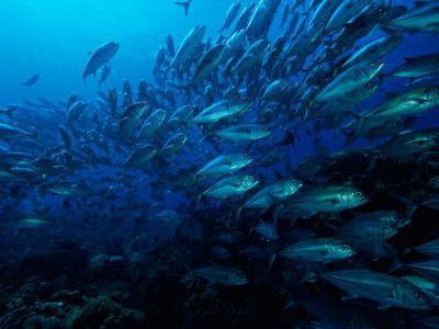 https://imgc.artprintimages.com/img/print/a-school-of-fish-find-protection-in-numbers-as-they-swim-over-a-reef_u-l-p4u1za0.jpg?p=0