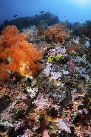 A Scorpionfish Is Hidden Among Soft Corals on a Reef in Indonesia-Stocktrek Images-Photographic Print