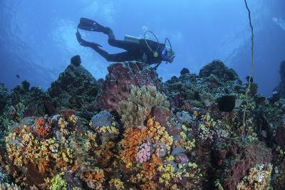 A Scuba Diver Swims Above a Colorful Coral Reef Near Sulawesi, Indonesia-Stocktrek Images-Photographic Print