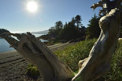 A Sculpted Piece of Driftwood in a Scenic Shore-Side Landscape-Jonathan Kingston-Photographic Print