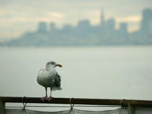A Seagull Rests on a Rail in Sausalito, Calif.
