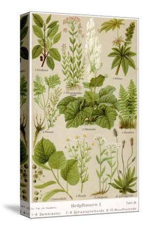 A Selection of 11 Healing Plants and Herbs Including Camomile and Rhubarb