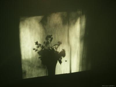 A Shadow of a Vase of Flowers Falls on a Wall-Stephen Alvarez-Photographic Print