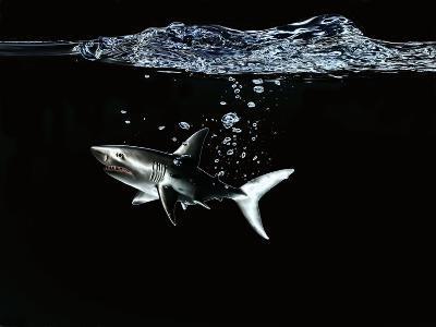 A Shark under Water-Hermann Mock-Photographic Print