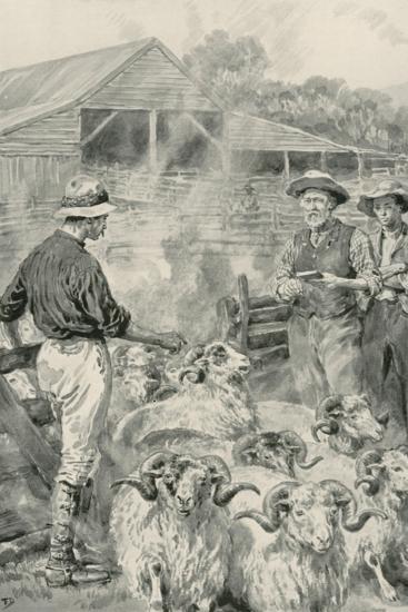A Sheep Station on Canterbury Plains-Frank Dadd-Giclee Print