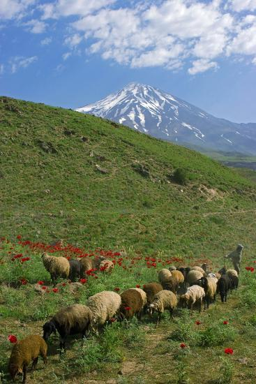 A Shepherd and His Sheep on the Hills Near Mount Damavand, a Sacred Mountain in Persian Culture-Babak Tafreshi-Photographic Print