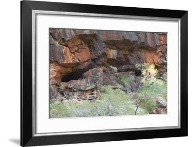 A Short-Eared Rock-Wallaby Jumps Toward its Cliffside Cave-Jeff Mauritzen-Framed Photographic Print