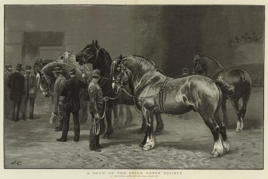 A Show of the Shire Horse Society--Giclee Print