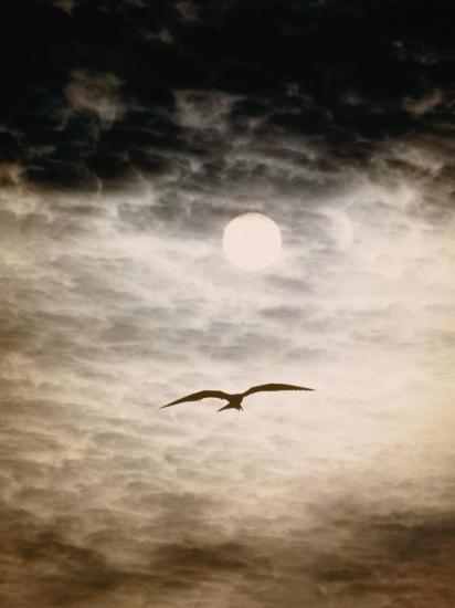 A Silhouetted Frigate Bird Takes Flight in a Stangely Lit Daytime Sky-Paul Chesley-Photographic Print